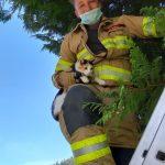 20-09-2020 - Tierrettung: Katze auf Baum